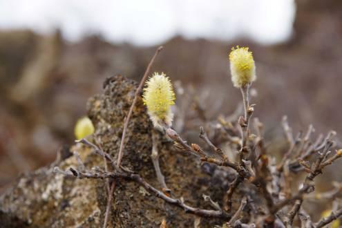 Auch in Dimmuborgir erhält der Frühling Einzug