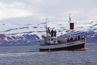 Whale Watching Tour in der Bucht von Húsavík