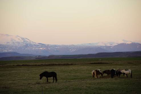 Blick aus unserer Unterkunft Hestakrain